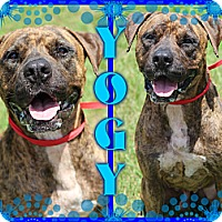Adopt A Pet :: Yogy - Tampa, FL