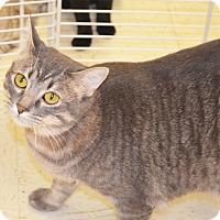 Adopt A Pet :: Tabitha - Lincoln, NE