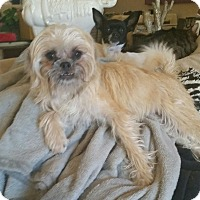 Adopt A Pet :: Monkey - Tucson, AZ