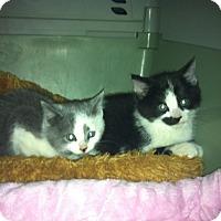 Adopt A Pet :: Buckeye & Brutus - Fairborn, OH