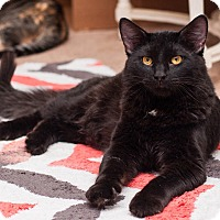 Adopt A Pet :: Jimmy John - Addison, IL