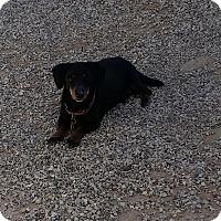 Adopt A Pet :: Sophie - Lubbock, TX