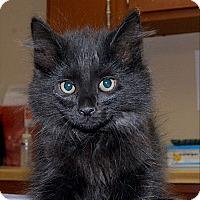 Adopt A Pet :: War Admiral - Medina, OH