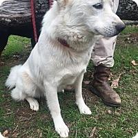 Adopt A Pet :: Snowman Adoption pending - Manchester, CT