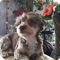 Adopt A Pet :: Darren - Las Vegas, NV