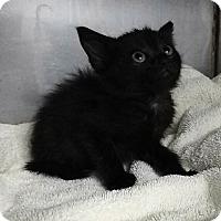 Adopt A Pet :: MIGHTY JOE - Powellsville, NC