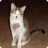Adopt A Pet :: Jessie - Evans, WV