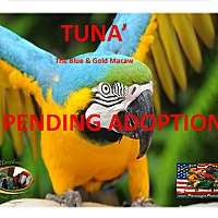 Adopt A Pet :: TUNA' The Terrific Macaw - Vancouver, WA