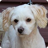 Adopt A Pet :: Mickey - Los Angeles, CA