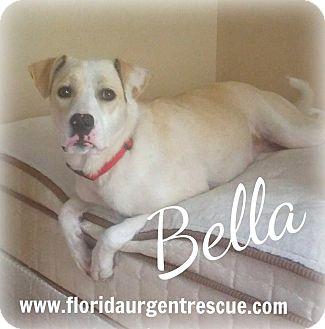 Labrador Retriever/Alaskan Malamute Mix Dog for adoption in Jacksonville, Florida - Bella