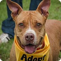 Adopt A Pet :: Anna - Plano, TX