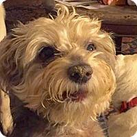 Adopt A Pet :: Elton - Austin, TX
