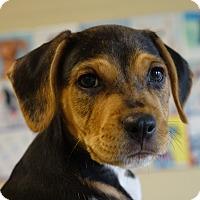Adopt A Pet :: Kalabar - Columbia, IL