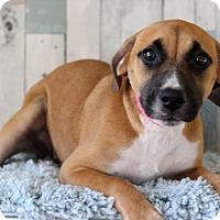 Adopt A Pet :: Amy - Waldorf, MD