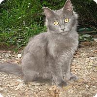 Adopt A Pet :: Flosse - Gainesville, VA
