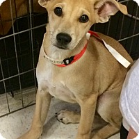 Adopt A Pet :: Moe in CT - Manchester, CT
