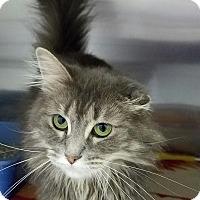Adopt A Pet :: Sweetness - Elyria, OH