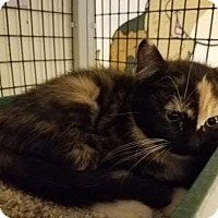 Adopt A Pet :: Allie - Tucson, AZ