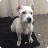Adopt A Pet :: Chacha - BONITA, CA