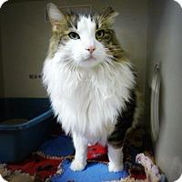 Adopt A Pet :: Sinead - Casa Grande, AZ