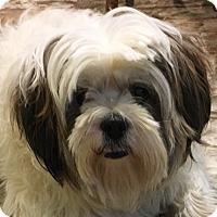 Adopt A Pet :: Lulu - Oklahoma City, OK
