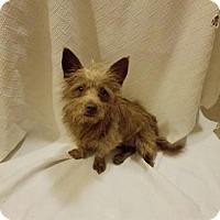 Adopt A Pet :: Culpepper - San Antonio, TX