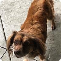 Adopt A Pet :: Frank - Monrovia, CA