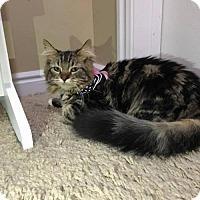 Adopt A Pet :: Pebbles - Salt Lake City, UT