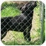 Photo 2 - Labrador Retriever Dog for adoption in Chattanooga, Tennessee - Running Bear