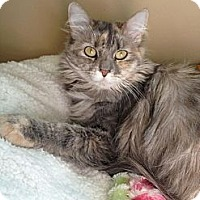 Adopt A Pet :: Evelyn - Edmond, OK