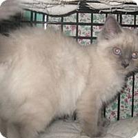 Adopt A Pet :: Karma - Dallas, TX