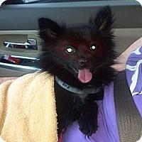 Adopt A Pet :: Freddy - Hazard, KY