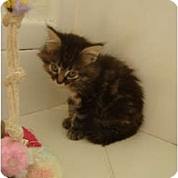 Adopt A Pet :: Muffin - Coral Springs, FL