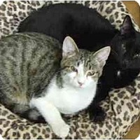 Adopt A Pet :: Tarzan - Lake Charles, LA