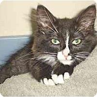 Adopt A Pet :: Dasi - Davis, CA