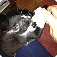 Adopt A Pet :: Flower - Westfield, MA