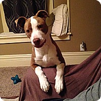 Adopt A Pet :: Lucy - Evansville, IN