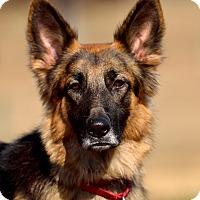 Adopt A Pet :: Gretchen - Dacula, GA