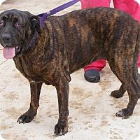 Adopt A Pet :: Mishka - Floresville, TX