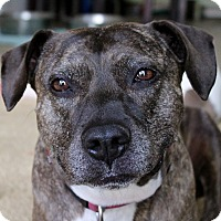 Adopt A Pet :: Trixie - Inglewood, CA