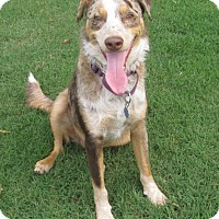 Adopt A Pet :: Copper - Newcastle, OK