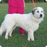 Adopt A Pet :: Titan $125 - Seneca, SC