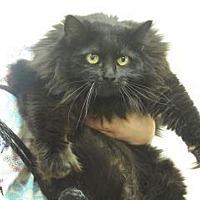 Adopt A Pet :: Mario - Wildomar, CA