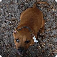 Adopt A Pet :: Ferdinand - Bradenton, FL