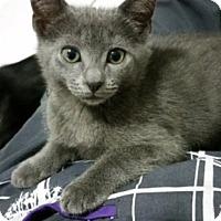 Adopt A Pet :: Bullseye - Oakland Park, FL