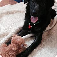Adopt A Pet :: Lady - Murrells Inlet, SC