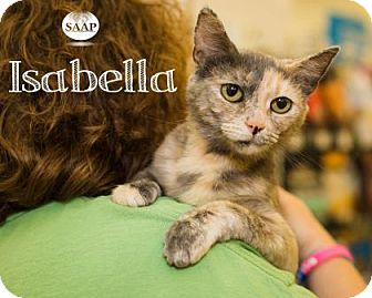 Domestic Shorthair Kitten for adoption in Newport, Kentucky - Isabella