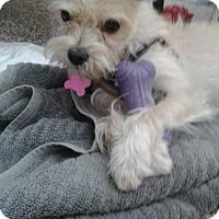 Adopt A Pet :: Aly - Thousand Oaks, CA