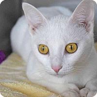 Adopt A Pet :: Loca - Sierra Vista, AZ