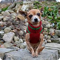 Adopt A Pet :: Pepe#2 - Pittsburgh, PA